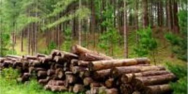 細數上海展臺設計搭建中常見且十分耐用的木材